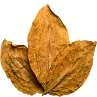 tobacco_PNG41